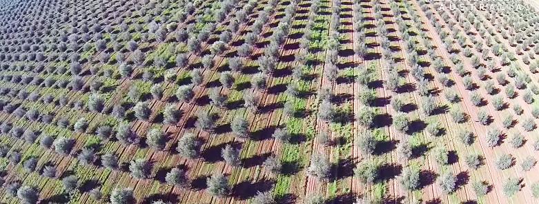 сады Австралии