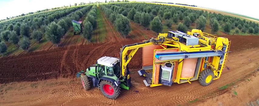 машина для сбора оливок и цитрусовых